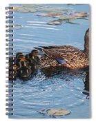 Mama Mallard And Her Ducklings Spiral Notebook