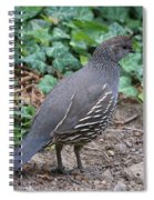 Mama Quail Profile With Ivy Spiral Notebook