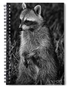 Mama Raccoon Spiral Notebook