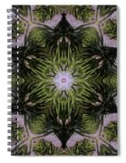 Mandala Sea Sponge Spiral Notebook