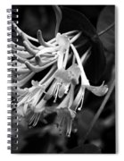 Mandarin Honeysuckle Vine 1 Black And White Spiral Notebook