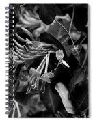 Mandarin Honeysuckle Vine 2 Black And White Spiral Notebook