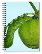 Manduca Sexta Spiral Notebook