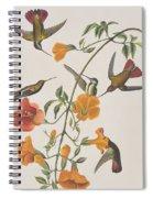 Mango Humming Bird Spiral Notebook