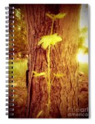 Maple Branch Growing From Trunk Spiral Notebook