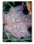 Maple Dew Spiral Notebook