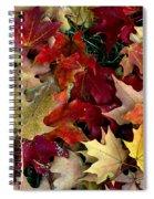 Maple Leaf Colors Spiral Notebook