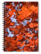 Maple Leaves Aglow Spiral Notebook