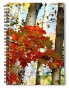 Maple Leaves And Birch Bark Spiral Notebook