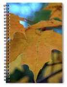 Maple Leaves In Autumn Spiral Notebook