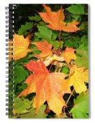 Maple Mania 10 Spiral Notebook