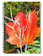 Maple Mania 6 Spiral Notebook