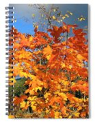 Maple Mania 8 Spiral Notebook