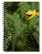 Maple On Fern Spiral Notebook