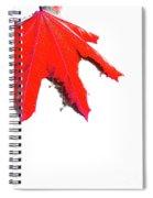 Maple Spiral Notebook