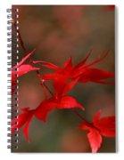 Maple Tree Leaves II Spiral Notebook