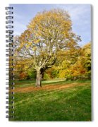 Maple Tree On The Slope. Spiral Notebook