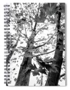 Maple Trees In Black And White Spiral Notebook