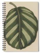 Maranta Fasciata Spiral Notebook