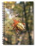 Marbled Orb Weaver Spiral Notebook