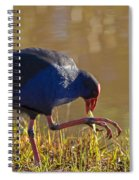 March Of The Swamphen Spiral Notebook