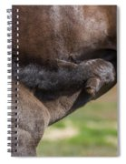 Mare And Foal, Icelandicelandic Spiral Notebook