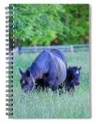 Mare And Foal In Shadows Spiral Notebook