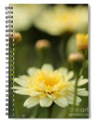 Marguerite Daisy Named Madeira Crested Primrose Spiral Notebook