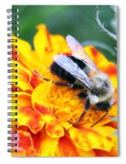 Marigold And The Bee Spiral Notebook