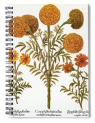 Marigolds, 1613 Spiral Notebook