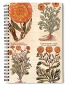 Marigolds Spiral Notebook