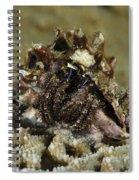 Marine Hermit Crab Spiral Notebook