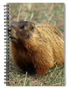 Marmot Spiral Notebook