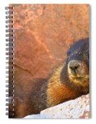 Marmot On The Rocks Spiral Notebook