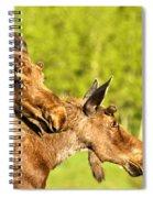 Maroon Bells Moose Pair Spiral Notebook
