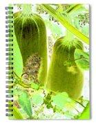 Marrow Mania Spiral Notebook