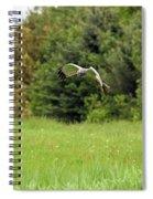 Marsh Hawk 2 Spiral Notebook