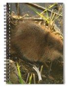 Marsh Life Spiral Notebook