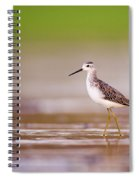 Marsh Sandpiper Tringa Stagnatilis Spiral Notebook