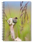 Marsh Wren Spiral Notebook