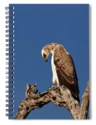 Martial Eagle Spiral Notebook