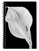 Marvelous Calla Lily In Black And White Spiral Notebook