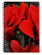 Mary M. Spiral Notebook