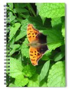 Maryland Eastern Comma Spiral Notebook