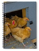 Aunt Mary's Chickens Spiral Notebook