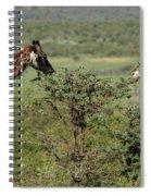 Masai Mara Giraffe Spiral Notebook