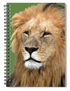 Masai Mara Lion Portrait    Spiral Notebook