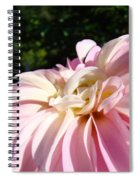 Master Gardener Pink Dahlia Flower Garden Art Prints Canvas Baslee Troutman Spiral Notebook