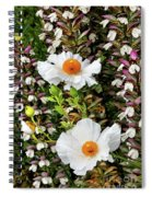 Matilija Poppies Spiral Notebook