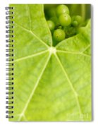 Maturing Wine Grapes Spiral Notebook